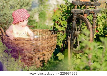 Amazing Ukrainian Little Baby Is In The Garden And Eats Red Berries Along The Spinning Wheel