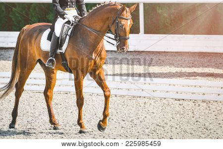 Elegant Rider Woman And Sorrel Horse. Beautiful Girl At Advanced Dressage Test On Equestrian Competi