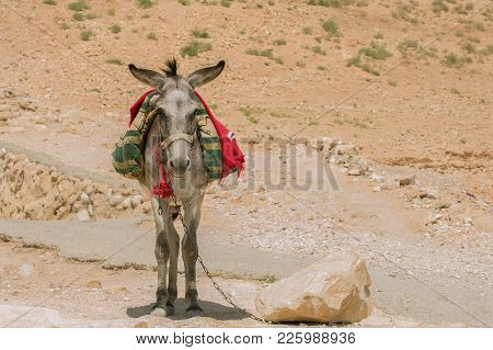Hard Way May Be More Facilitate If The Travelers Resort To Service Of Burro
