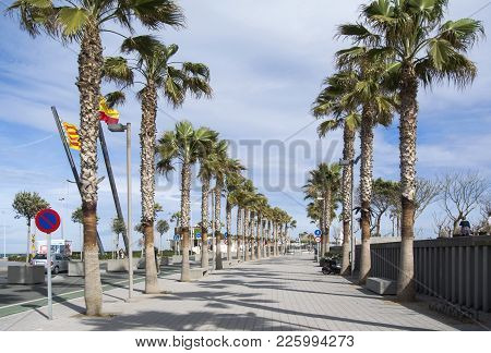 A Walking Path On A Sunny Day In Valencia Between The Palm Trees. La Malvarrosa Beach Palm Trees Pro