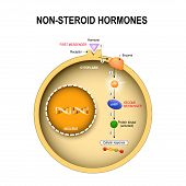 Animal cell with nucleus, cytoplasm, DNA, enzime, protein kinase, receptor, and hormone. How non-steroid hormones work. Non-steroid hormones interact with receptors on the cell membrane and activate secondary messenger systems that carry out their effects poster