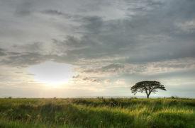 Rain tree in sunset background