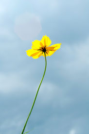 Yellow flower on the sky background
