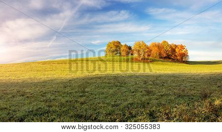 Trees On The Field In Autumn On Beautiful Sunny Day