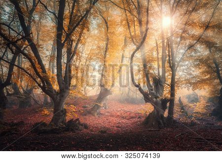 Fairy Forest In Fog At Sunrise In Autumn Colors. Magical Trees With Sun Rays. Colorful Dreamy Landsc