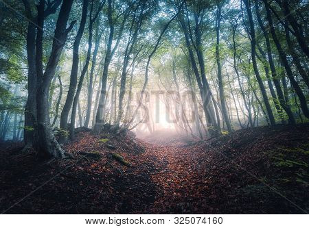 Beautiful Mystical Forest In Fog At Sunrise In Autumn. Colorful Landscape With Enchanted Trees With