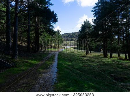 Landscape Of A Forest With A Small Path And A Man In The Distance. Nature, Landscape