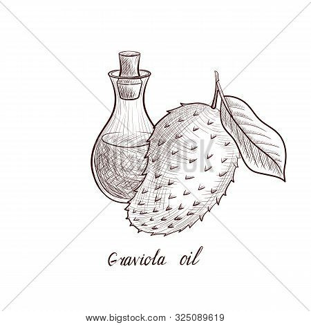 Vector Drawing Graviola Oil, Bottle Of Vegetable Oil And Soursop, Hand Drawn Illustration