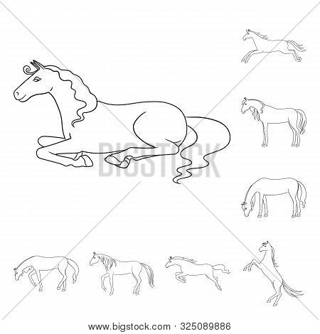 Isolated Object Of Stallion And Galloping Logo. Set Of Stallion And Riding Vector Icon For Stock.