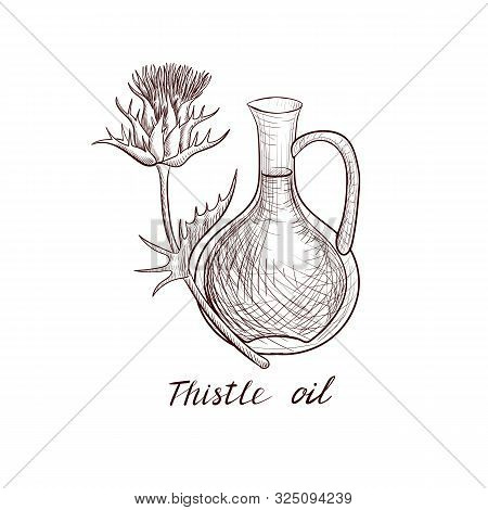 Vector Drawing Thistle Oil, Bottle Of Vegetable Oil And Silybum Marianum Plant, Hand Drawn Illustrat
