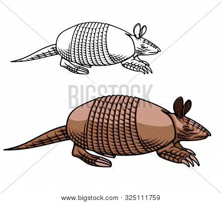 Armadillo Animal Vector Icon Design Of American Mammal With Brown Armoured Shell Or Carapace, Legs W