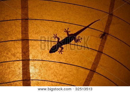 Gecko and Insect Silhouettes On A Lamp Shade