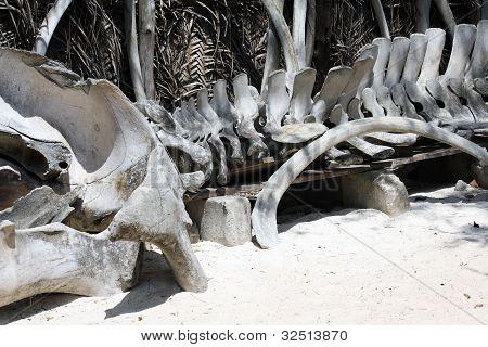 Bones Of Whale In Zanzibar