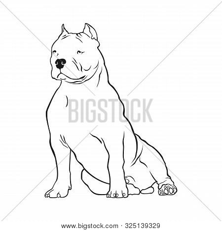 American Bully Vector Illustration. Dog Breed American Bully Sits Frontally On A White Background.