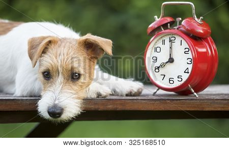 Daylight Savings Time, Cute Pet Dog Puppy With A Red Retro Alarm Clock, Web Banner