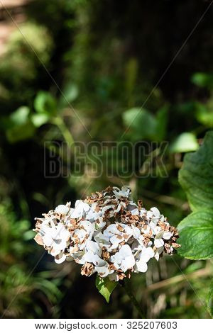 White Flower In The Middle Of The Vegetation Of The Forest On The Island Of Madeira