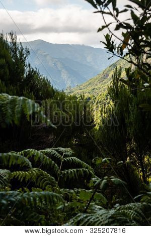View Of The Mountains Through The Vegetation In Madeira