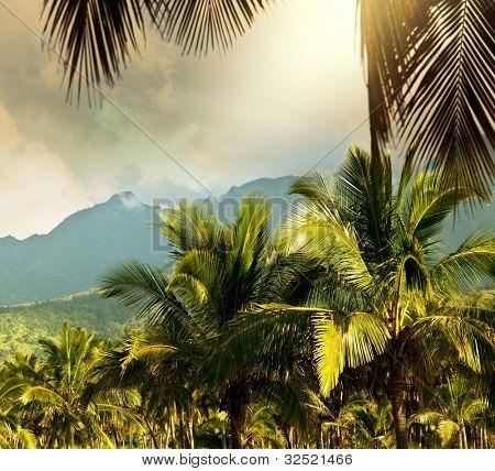 Hawaiian landscapes