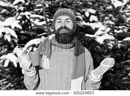 Guy With Firtrees Covered With Snow On Background.