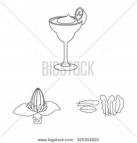 Vector Design Of Organic And Potassium Sign. Collection Of Organic And Diet Stock Symbol For Web.