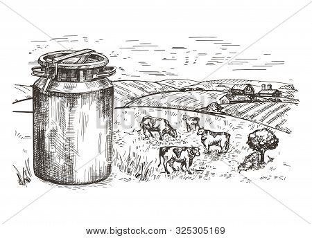 Milk Can And Rural Landscape. Cows Graze In The Pasture.