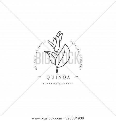 Vector Design Element And Icon In Linear Style - Quinoa - Healthy Eco Food. Organic Ingredient. Logo