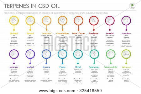 Terpenes In Cbd Oil With Structural Formulas Horizontal Business Infographic Illustration About Cann