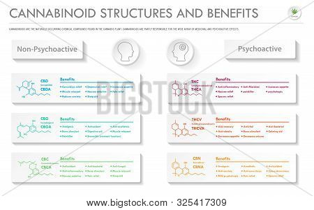 Cannabinoid Stuctures And Benefits Horizontal Business Infographic Illustration About Cannabis As He