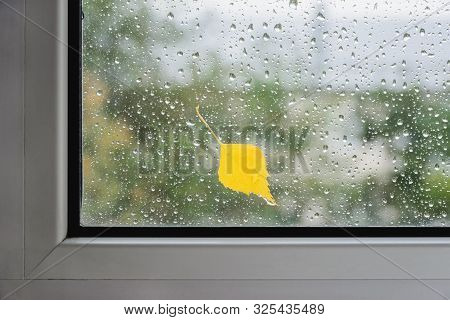 Yellow Birch Leaf On Wet Glass Of Window With Autumn Blurred Reflection Trees, Horizontal Stock Phot