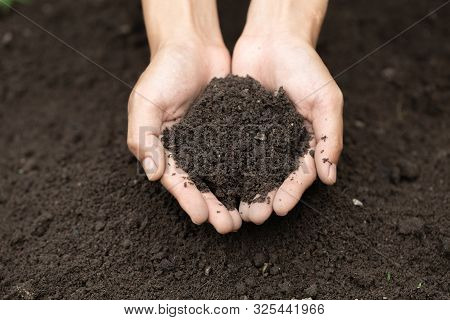 Top View. Farmer Holding Soil In Hands.  The Researchers Check The Quality Of The Soil.  Agriculture
