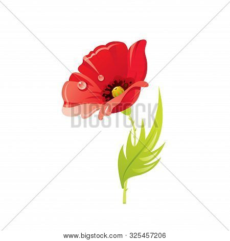 Red Poppy Flower, Floral Icon. Realistic Cartoon Cute Plant Blossom, Spring, Summer Garden Symbol. V