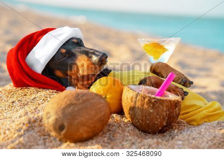 Adorable Black And Tan Dachshund Dog, Buried Under Sand On The Beach, Chill And Relaxing On A Seasho