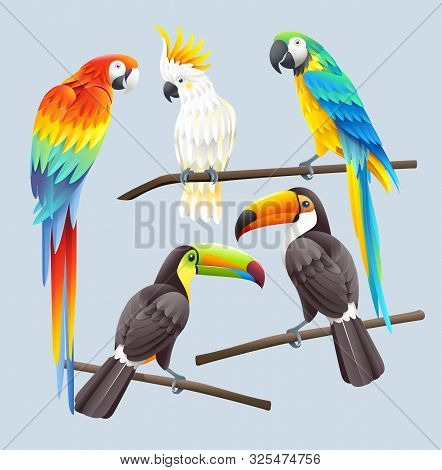 Scarlet Macaw, Blue Macaw, White Cockatoo And Two Toco Toucans Vector Illustration