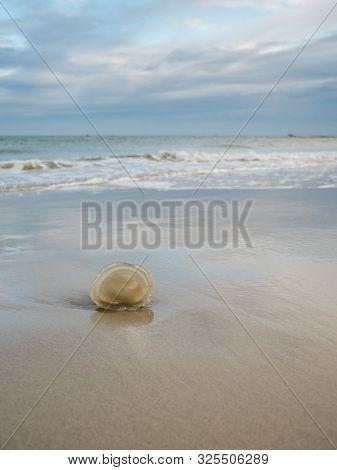 Jellyfish Stranded On The Dutch Wadden Sea Coast