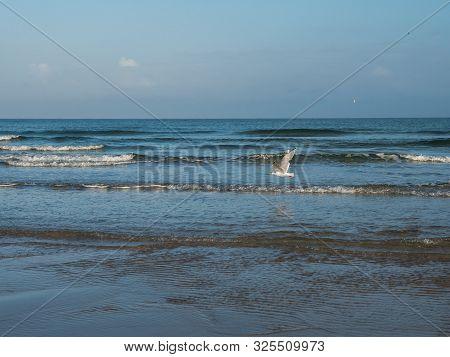 Sea Gull Flying Over Dutch Waddenzee Coastline
