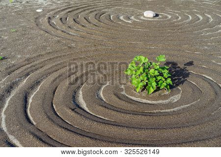 Circular Lines With Plant In The Center