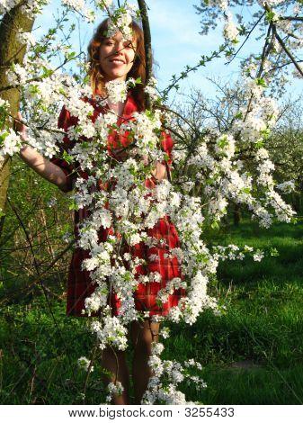 Girl Behind Cherry-Tree