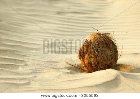 Coconut On Sand
