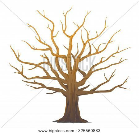 One Wide Massive Old Oak Tree Without Leaves Isolated Illustration, Majestic Oak Without Foliage Wit