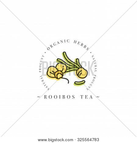 Packaging Design Template Logo And Emblem - Rooibos Tea. Logo In Trendy Linear Style Isolated On Whi