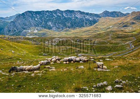 Picturesque Summer Mountain Landscape Of Durmitor National Park, Montenegro, Europe, Balkans Dinaric