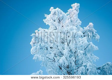 Beautiful Winter Tree And Branches Covered Snow