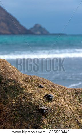 Crabs On A Beach Rock With The Ocean, Sky And Cliffs Out Of Focus In The Background. Los Frailes Bea