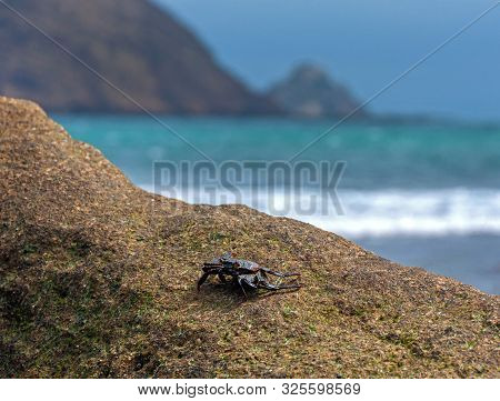 Crab On A Beach Rock With The Ocean, Sky And Cliffs Out Of Focus In The Background. Los Frailes Beac
