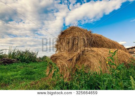 Dry Haystacks For Feeding Animals On Green Grass And In The Open. Rolled Straw Near The Barn In The