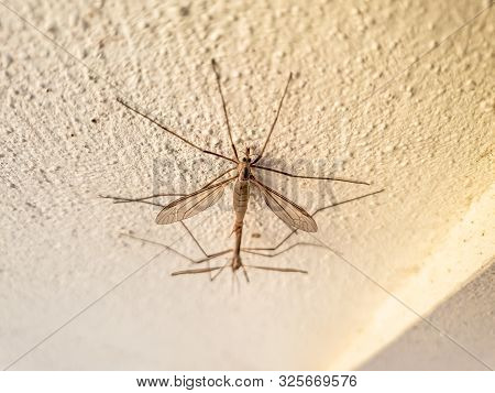 Two Gnats Copulating In A Wall In The Summer