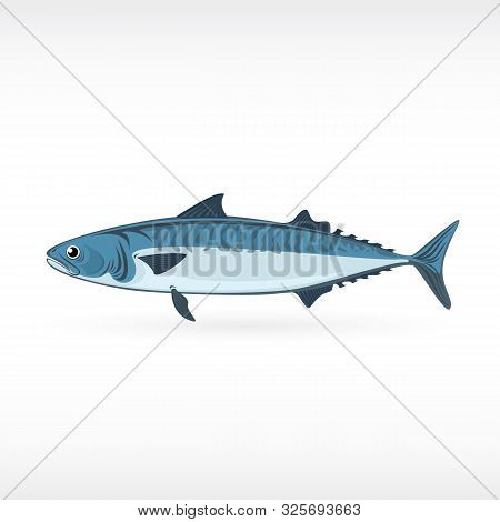 Mackerel Saltwater Fish Isolated In White Background. Fresh Fish In A Simple Flat Style Eps Illustra