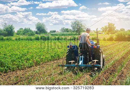 A Farmer On A Tractor Plows A Field. Vegetable Rows Of Leeks. Plowing Field. Seasonal Farm Work. Agr
