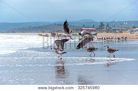 Seagulls At The Beach Taking Flight And Others Flying, With The Ocean And Fishing Town In The Backgr