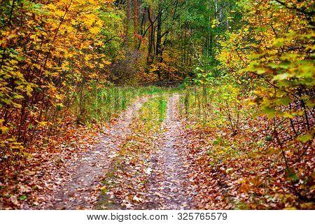 Double Path In Autumn Forest. Non-urban Scene.